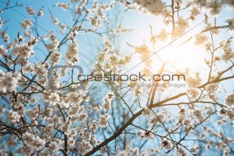 background of spring sky