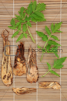 Angelica Herb