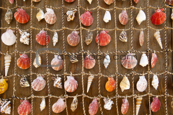Wall Tapestry of Sea Shells