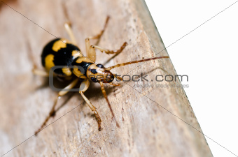 brown bug on wood isolated