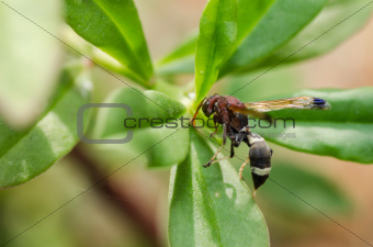 wasp on the leaves