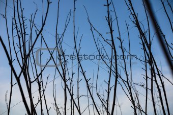 Branches of tree and blue sky