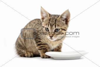 Cat and saucer of milk