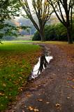 reflection of autumn tree in puddle