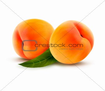 Ripe peach isolated on white. Vector illustration