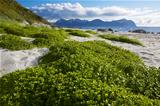 Summer on Lofoten