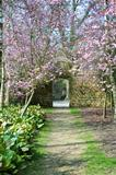 Beautiful fresh Spring blossom and old stone wall and archway