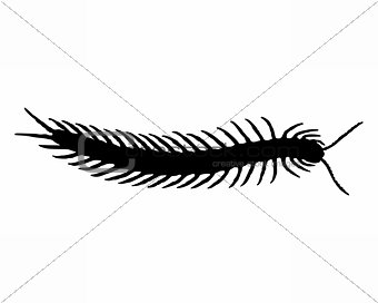 Centipede