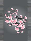 Sakura blossoms on a dark background