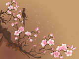 branch of sakura  