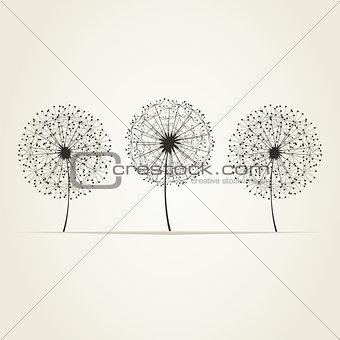 Three dandelions
