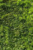 green plant overgrown