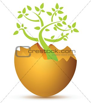 Broken egg with plant