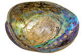 Paua Abalone Shell Inside Closeup