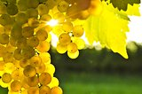 Yellow grapes.