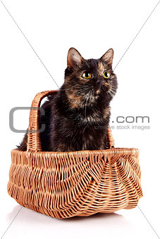 Cat in a wattled basket
