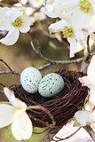 Springtime Nest