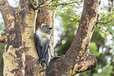 Monkey on a tree