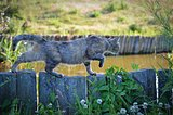 Cat sneaking along fence