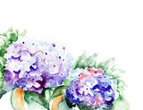 Hydrangea blue flowers