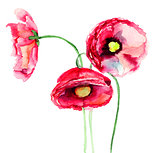 Colorful red flowers
