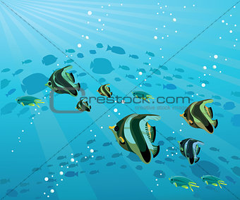 Group of colored fish at the sea
