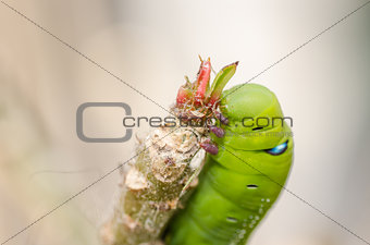 Green worm with leaves