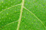 water drops and leaf