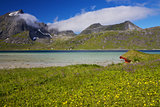 Norway summer