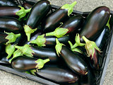 eggplants harvest