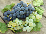 grape clusters with leaves
