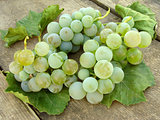 white grape clusters with leaves