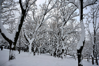 views of snow-covered tree