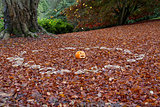 Pumpkin in Fairy Ring