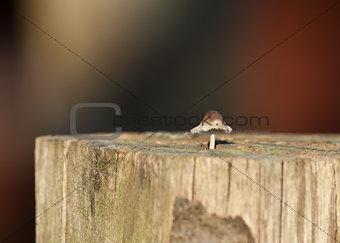 Toadstool in Sunlight