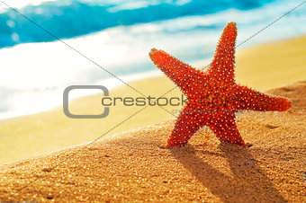 seastar on the sand of a beach