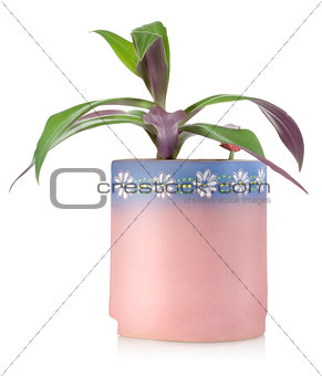 Flower in a ceramic pot
