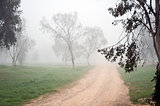 Dirt road in the fog.
