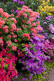 bright flowers of bushes