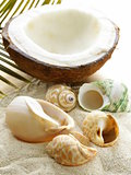 beach sand and seashells,  concept of vacation