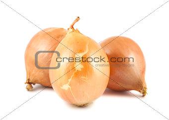 Three fresh golden onions