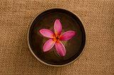 frangipani spa concept photo, lowlight ambient spa lighting, sha