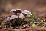 Mushroom family