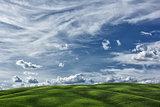 Cornfield Tuscany