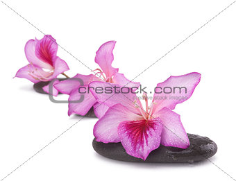 zen stones with pink flowers