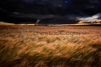 Tornado twister over fields in Summer storm