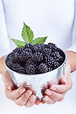 Woman hands holding blackberries in a small bucket