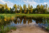Lake in the Forest and Trees Reflection near Moscow, Russia