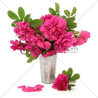 Rugosa Rose Flowers
