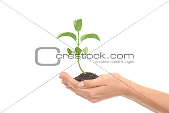 Little render of plant growing in a woman hands